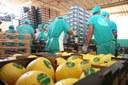 Balança comercial do RN fecha 2020 com superávit de US$ 159,4 milhões.