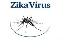 Surto de zika no Brasil completa um ano: uma doença obscura virou uma emergência de saúde global.